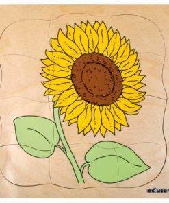 Growth/Life cycle puzzle sunflower - Educo