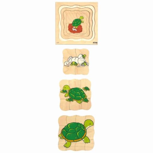 Growth/Life cycle puzzle turtle - Educo