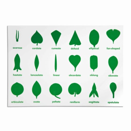 Botany cabinet control chart - Nienhuis Montessori