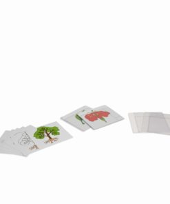 First set of botany cards - Nienhuis Montessori