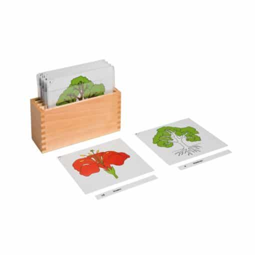First set of botany cards: cards and box - Nienhuis Montessori