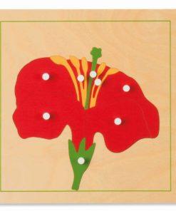 Botany puzzle: flower - Nienhuis Montessori