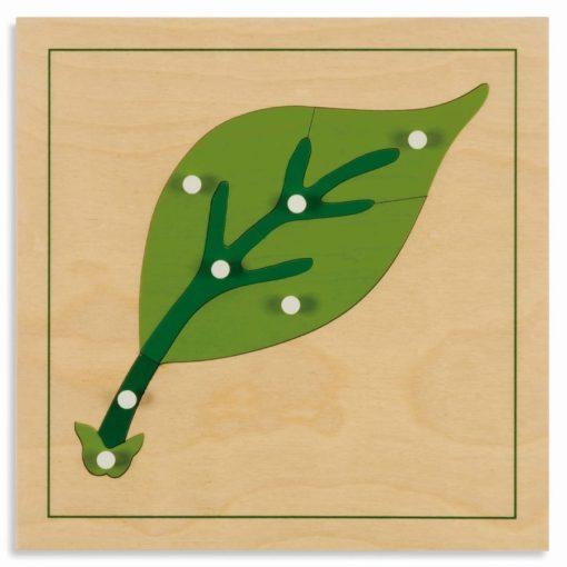 Botany puzzle: leaf - Nienhuis Montessori
