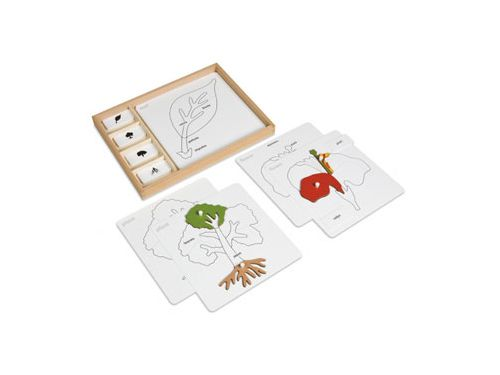 Botany puzzle activity set - Nienhuis Montessori