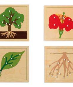 Botany puzzles - Nienhuis Montessori