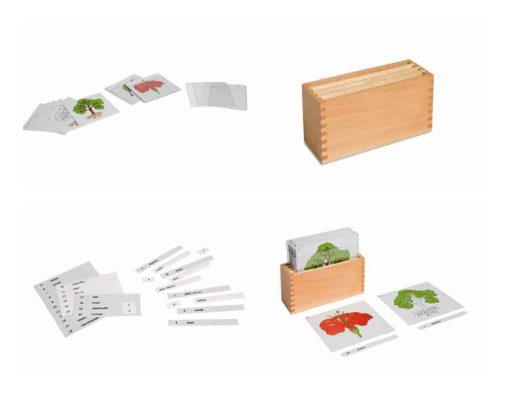First set of botany cards: complete set - Nienhuis Montessori