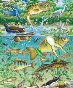 Maxi puzzle European aquatic pond ecosystem - Larsen