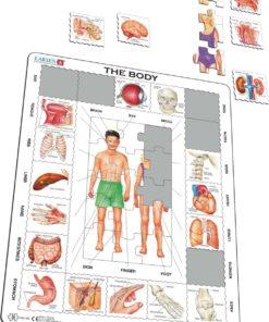 Maxi puzzle our body: English - Larsen