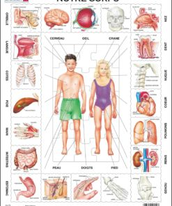 Maxi puzzle our body: French - Larsen