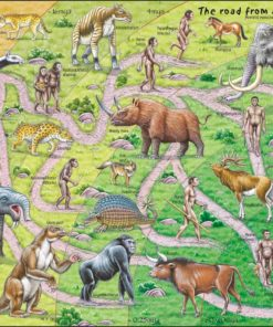 Maxi puzzle the road from ape to human: English - Larsen
