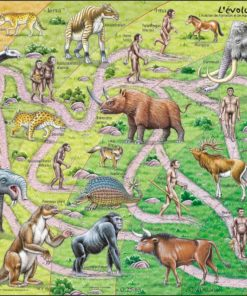 Maxi puzzle the road from ape to human: French - Larsen