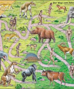 Maxi puzzle the road from ape to human: German - Larsen