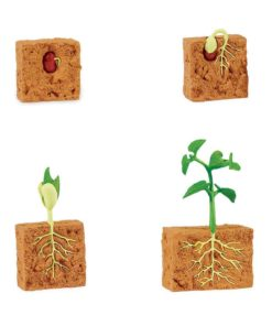 Life cycle of a green bean plant figurines set - Safari Ltd learning toy