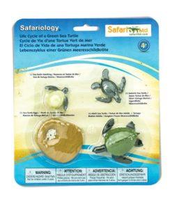 Life cycle of a green sea turtle figurines set - Safari Ltd learning toy