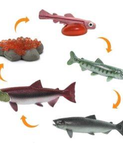 Life cycle of a salmon figurines set Safari Ltd learning toy