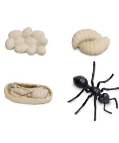 Life cycle of an ant figurines set - Safari Ltd learning toy