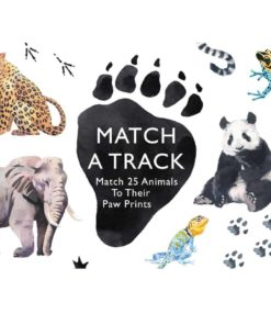 Match a track: a matching game of animals and their paw prints