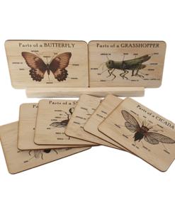 Bug anatomy cards set - 5 Little Bears