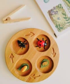 Wooden handmade life cycle tray / Montessori inspired learning toy – Threewood